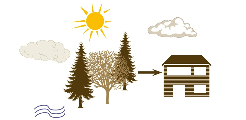 lemnul si energia